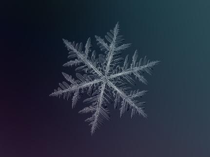 snowflake2-2.jpg